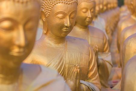 Many Buddha statue selective selective focus photo