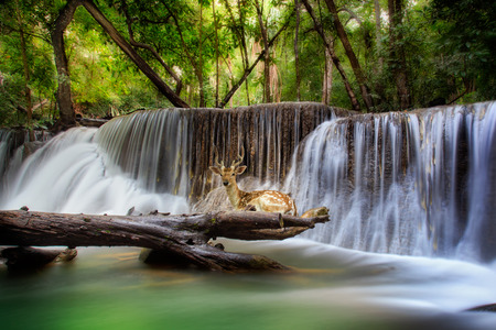 Top levelof Erawan Waterfall in Kanchanaburi Province with deer, Thailand