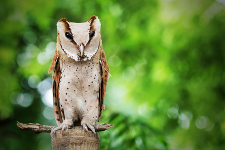 Owl sit on the log with grean background