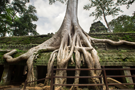 murals: Angkor Wat Cambodia. Ta Prohm Khmer ancient Buddhist temple  Stock Photo
