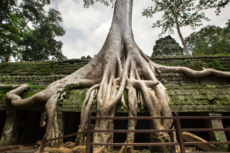 ficus: Angkor Wat Cambodia. Ta Prohm Khmer ancient Buddhist temple  Stock Photo