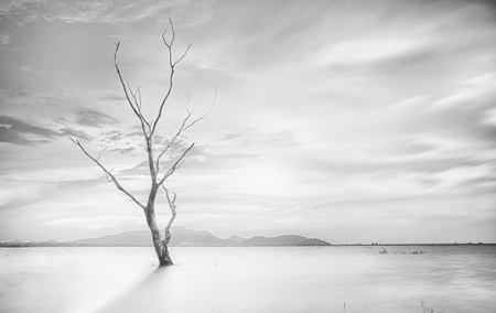 toter baum: Lonely dead tree. Kunst Natur
