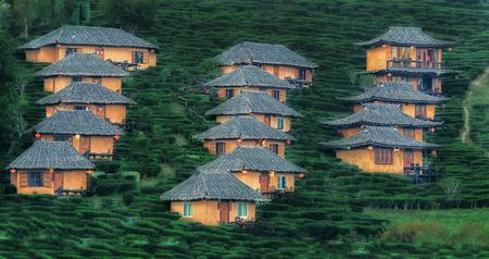 tele: Tea Plantation and hut in Ban Rak Thai. Mae Hong Son, Thailand. Take a photo from super tele lens at 480mm. Stock Photo