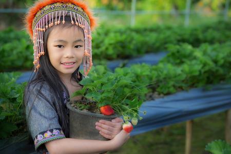 kid Farmers pick up strawberry from Doi Ang Khang plantation photo