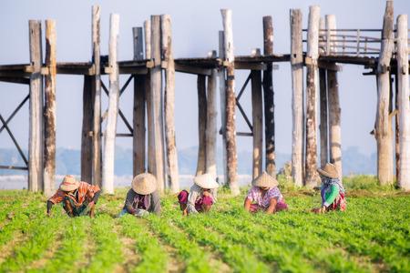 south east asia: farmers at work around U-Bein Bridge, Amarapura, Mandalay, Myanmar, farm, agriculture, industrial concept Stock Photo