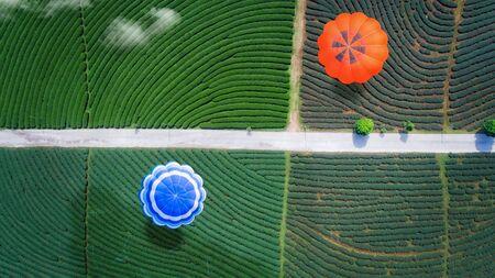 Hot air balloon fly over green tea farm, top view, bird eye view from drone
