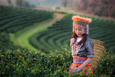키즈 및 녹차 필드에 shui 퐁, 치앙 라이, 앙 국, 치앙마이, 태국 근처