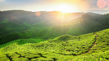 Viewpoint on the top of cameron highland, tea valley and sunrise in Malaysia
