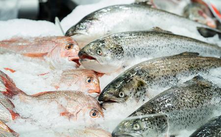 Salmón fresco en hielo en el mercado de mariscos Foto de archivo