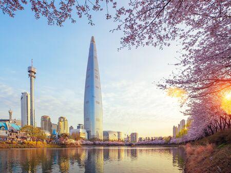 Sakura or cherry blossom park in seoul city with morning sunrise, South korea