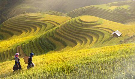 Rice fields on terraced of Mu Cang Chai, YenBai, Rice fields prepare the harvest at Northwest Vietnam.Vietnam landscapes. Banco de Imagens