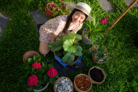 Asian woman plant a flower in her garden, this image can use for home, flower, gardent and environment concept