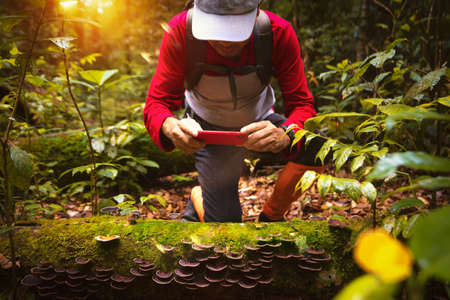Asian backpacker hiking and travel in deep forest in North of Thailand, this image can use for smartphone, photographer, outdoor and travel concept