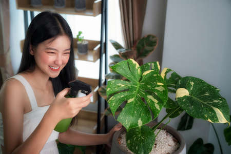 Asian lady watering to Monstera Variegated tree by spray in her room in her condominium, this image can use for hobby, relax, tree and decor concept Imagens