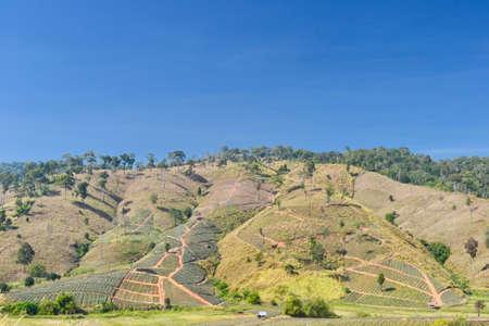 deforestacion: Deforestación. Gráfico Trakan Districtict, provincia de Phitsanulok, Tailandia.