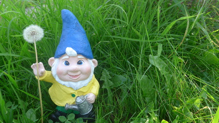 Garden dwarf with watering can and dandelion on a green meadow