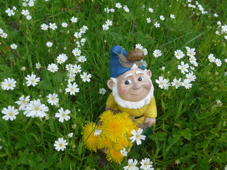 Garden dwarf on a green meadow with dandelion and snail