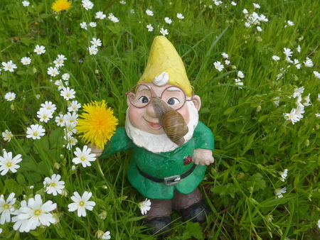 Garden dwarf on a flower meadow with a big snail (not protected by copyright)