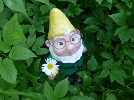 Garden dwarf in a flowerbed (not protected by copyright)
