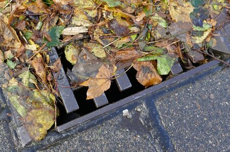 Obstructed sieve, wet leaves on the roadside