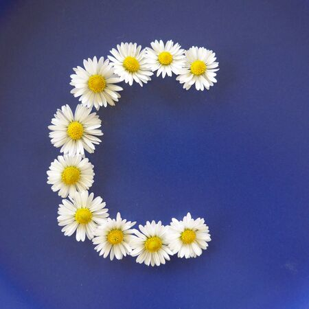 Letter C from white flowers, daisies, bellis perennis, close-up, on blue background