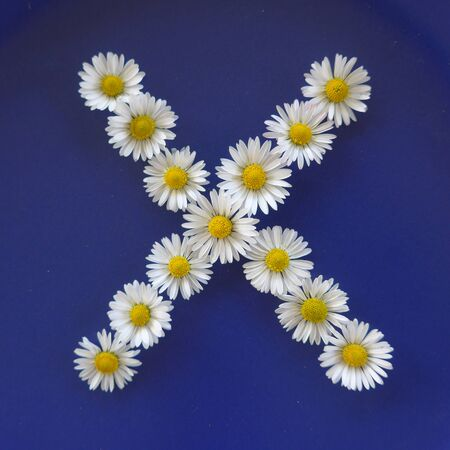 Letter X from white flowers, daisies, bellis perennis, close-up, on blue background Stock Photo