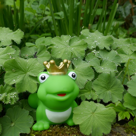 Little green toy frog with crown. In the garden, with dewdrops, close-up