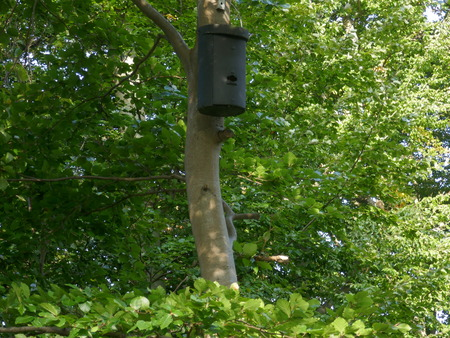 Accommodation for small bats