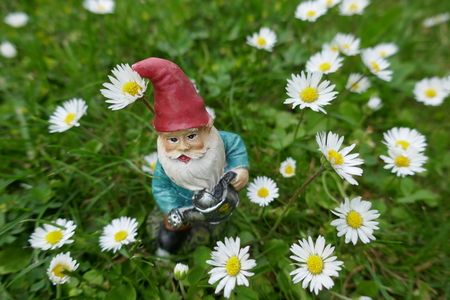 Garden gnome with watering can on a green meadow between many daisies