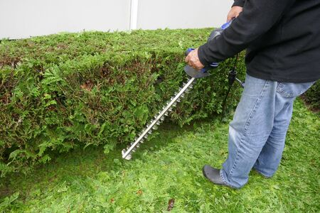 Gardening. An elderly man cuts the conifers with an electric hedge trimmer