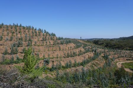 Reforestation, regeneration and regrowth of eucalyptus trees after forest fires in Portugal