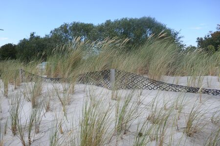 Dune protection at the Baltic Sea in Schleswig-Holstein, Germany. Sandbox and new planting with marram grass (Ammophila arenaria) Stok Fotoğraf