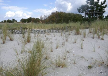 Dune protection at the Baltic Sea in Schleswig-Holstein, Germany. Sandfang and new planting with marram grass (Ammophila arenaria) Dune protection at the Baltic sea in Schleswig-Holstein, Germany. Sandbox and new planting with marram grass (Ammophila arenaria)