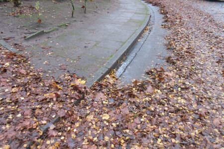 Wet foliage. Danger by wet foliage on autumn road and walkway
