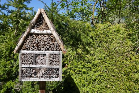 Insect hotel in the garden in front of a green hedge
