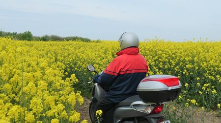 Canola blossom in spring in Schleswig-Holstein, Germany, A man carefully drives a scooter through a flowering rapeseed field on a narrow path.