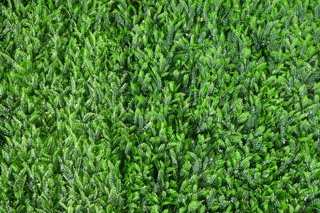 Artificial green plants, wall decoration, privacy screen, close-up, background, texture, Zdjęcie Seryjne