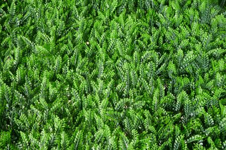 Artificial green plants, wall decoration, privacy screen, close-up, background, texture, 免版税图像