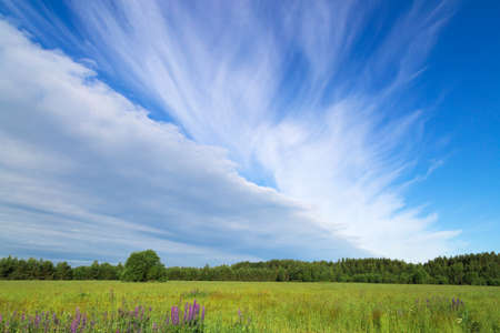 Beautiful blue sky with white fancy clouds. Clear day. Photo to replace the background.