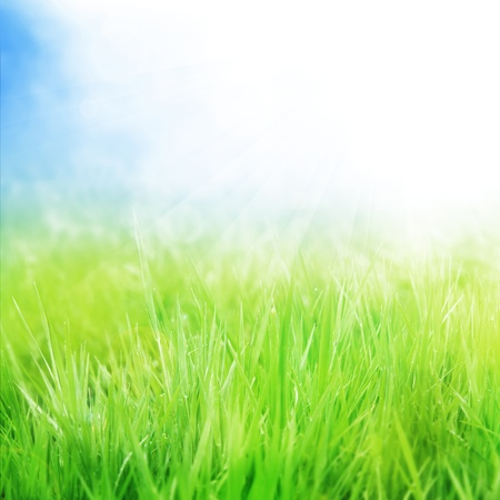 background with grass and sunshine photo