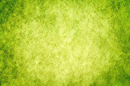 Gr�nes Gras Textur