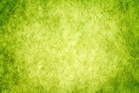 Green texture grass photo