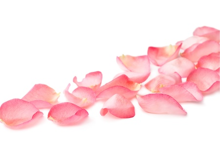 soft object: pink rose petals on white background