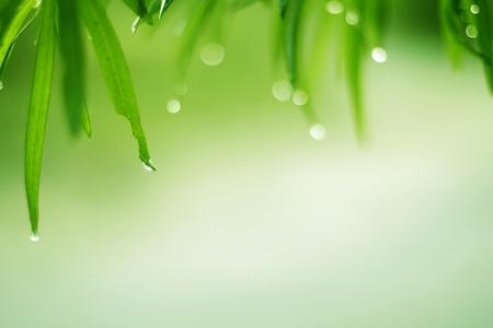 Tautropfen sind auf dem gr�nen Rasen