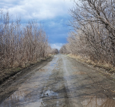 Puddles on a rural road surrounded by trees photo