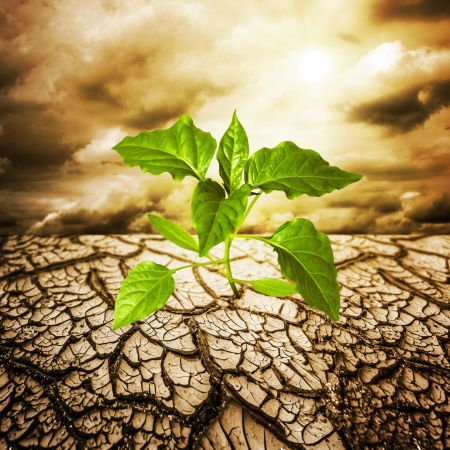 the climate: green sprout from dead soil