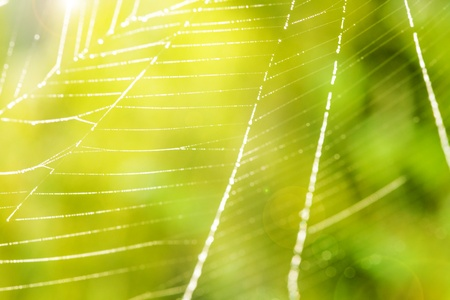 image of the spider web with water drops photo