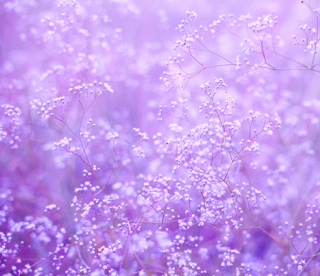 violet background: purple background with small flowers