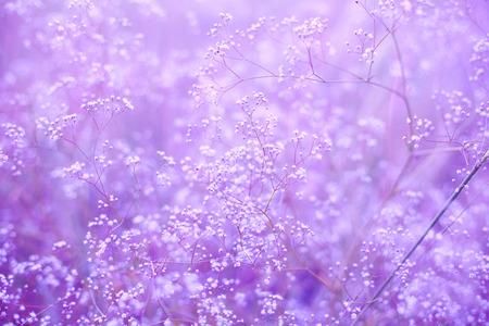 작은 꽃과 보라색 배경 스톡 콘텐츠