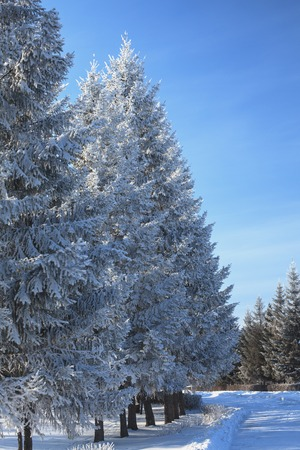 landschap ijzige winter ochtend boom takken bedekt met sneeuw